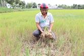 Le gouvernement soutient les localités touchées par la salinisation