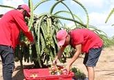 Fruits et légumes : les exportations atteignent 836 millions d'USD en trois mois