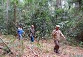 Binh Phuoc renforce la protection de ses forêts
