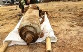 Une bombe de 100 kg désactivée à Diên Biên