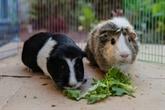 Besoin de soutien : les adoptions d'animaux s'envolent aux États-Unis