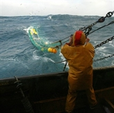 Pêche : feu vert de Bruxelles pour financer des arrêts temporaires