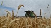 La Russie limite ses exportations de céréales