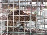 Vingt-cinq animaux sauvages libérés dans le parc national Bù Gia Mâp