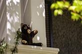À Washington, une chasse géante aux ours en peluche pour enfants