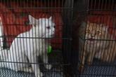 Pakistan : des chats, chiens ou lapins, victimes indirectes du coronavirus