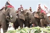 Fête des éléphants au Tây Nguyên