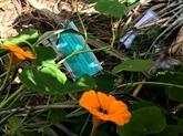 Coronavirus : auMoyen-Orient, gants et masques polluent villes et nature