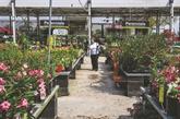 En Floride, la pandémie affecte aussi le marché des plantes ornementales