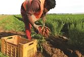 Le dur printemps des agriculteurs italiens