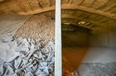 Les producteurs français de pommes de terre sont en crise