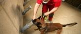 Comment des chiens français sont entraînés pour tenter de détecter le COVID-19