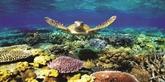 La protection de la vie marine au cœur d'une stratégie nationale