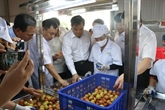 Hai Duong expédie son premier lot de litchi aux trois pays