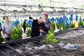 Vietnam et Chine renforcent les échanges commerciaux de produits agricoles