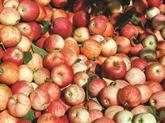 Mobilisation pour sauver fruits et légumes britanniques