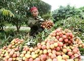 Semaine des fruits et produits agricoles de villes et provinces àHanoï