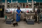 Les animaux peuvent désormais téléconsulter leur vétérinaire