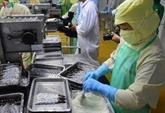 Le secteur de crevettes d'eau saumâtre s'efforce d'atteindre 3,5 milliards d'USD d'exportation