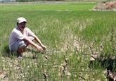 Thua Thiên-Huê lutte contre la sécheresse