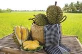 La légende du durian
