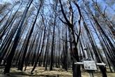 À Tchernobyl, des scientifiques mesurent le désastre après des incendies record