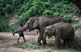 La grande migration des éléphants de Thaïlande