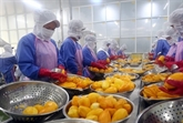 Les exportations de fruits et légumes atteignent plus 1,5 milliard d'USD