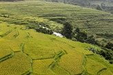 La beauté de Pù Luông à la saison du riz mûr