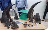 Hanoï : un transporteur de cornes de rhinocéros condamné à cinq ans de prison