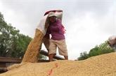 Le prix du riz du Vietnam tombe à 450 USD par tonne