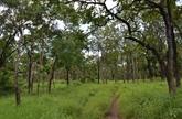Le ministre de l'Agriculture demande des efforts pour le développement des forêts