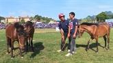 L'originalité des courses de chevaux traditionnelles de Bac Hà