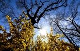 Arctique : l'Agence météo de l'ONU valide provisoirement le record de température à Verkhoyansk