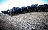 Conseil de sécurité : session sur le changement climatique