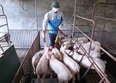 Le Vietnam exporte plus de 1.145 sortes de médicaments pour animaux