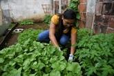 Guatemala : des potagers urbains contre les pénuries en temps de confinement
