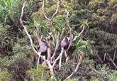 Le Parc national de Núi Chúa, un havre de biodiversité