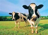 Vache grasse, vache maigre