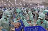 VASEP : les exportations de produits aquatiques commencent à se redresser