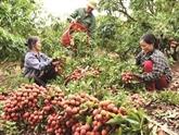 Vietnam et Japon discutent de la stimulation du commerce des biens de consommation