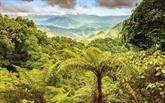 Création de la réserve naturelle de Dông Châu - Khe Nuoc Trong dans le Centre