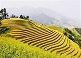 Sa Pa et Ninh Binh parmi les destinations incontournables d'Asie