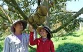 Promouvoir le durian vietnamien sur le marché australien