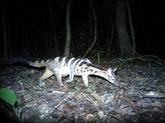Kon Tum : Kon Plông, un trésor de biodiversité à préserver