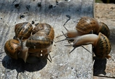 Ukraine : en plein boom, les élevages d'escargots stoppés par la pandémie