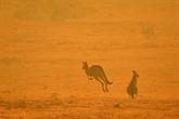 Trois milliards d'animaux tués ou déplacés par les feux de 2019-2020