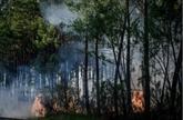 Premiers feux de l'été : plus de 500 ha de forêt ravagés en Gironde et Loiret