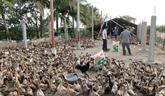 Le Cambodge exhorte les chômeurs touchés par le COVID-19 à se lancer dans l'agriculture