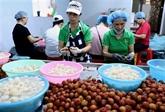 Les exportations de fruits et légumes rebondissent de 8,4% en juin